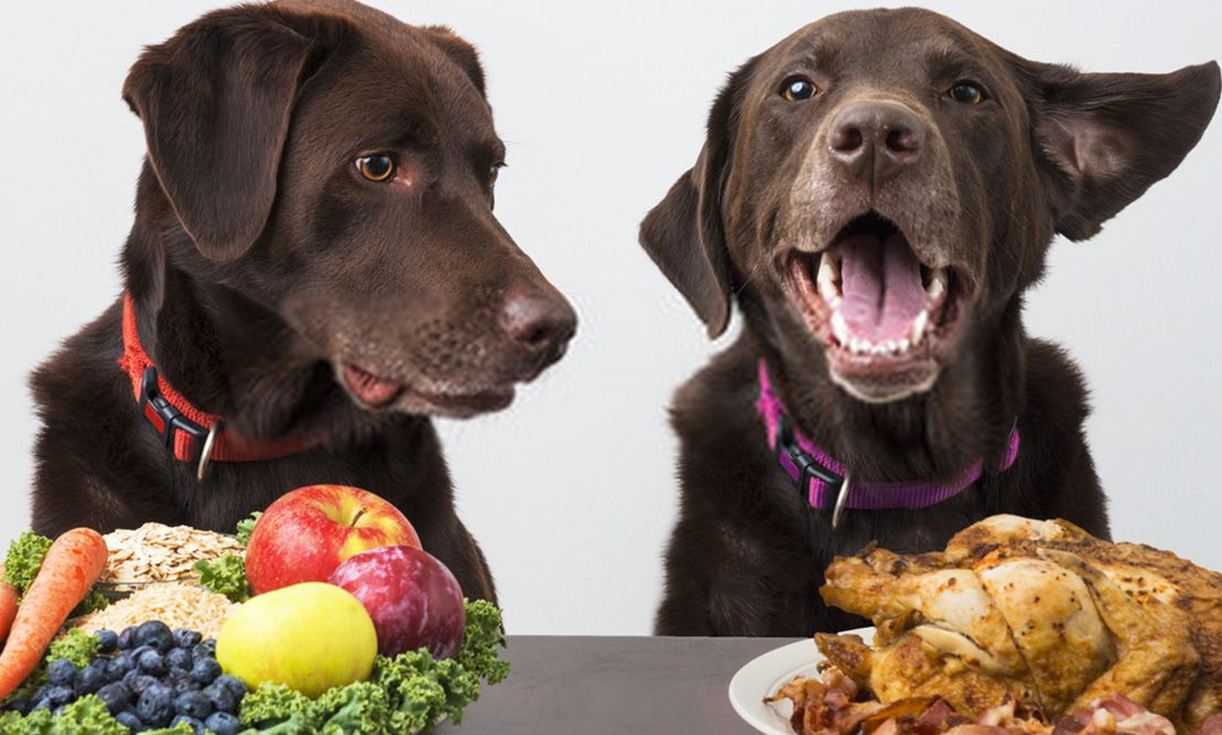 Top 5 Dog Food Ingredients For Healthy dogs