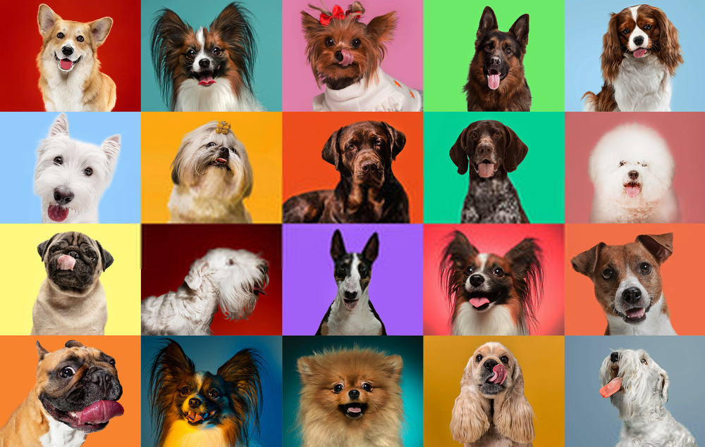 13 Dog Breeds for Beginners | Nuts4Pets