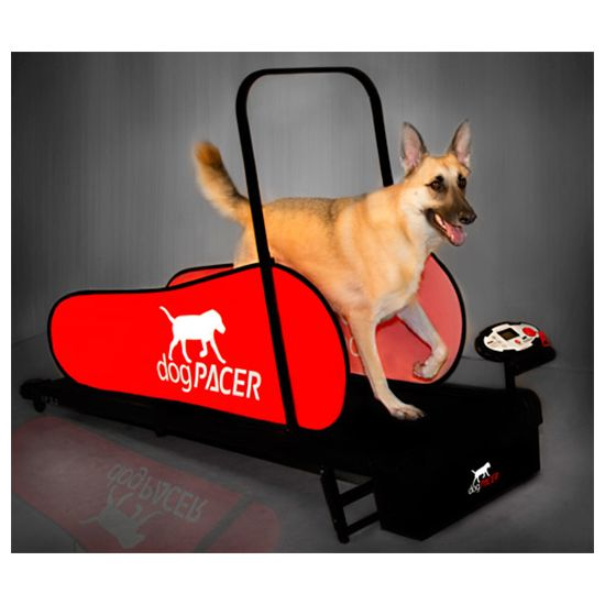 The dogPacer LF 3.1 Full Size Dog Pacer Treadmill